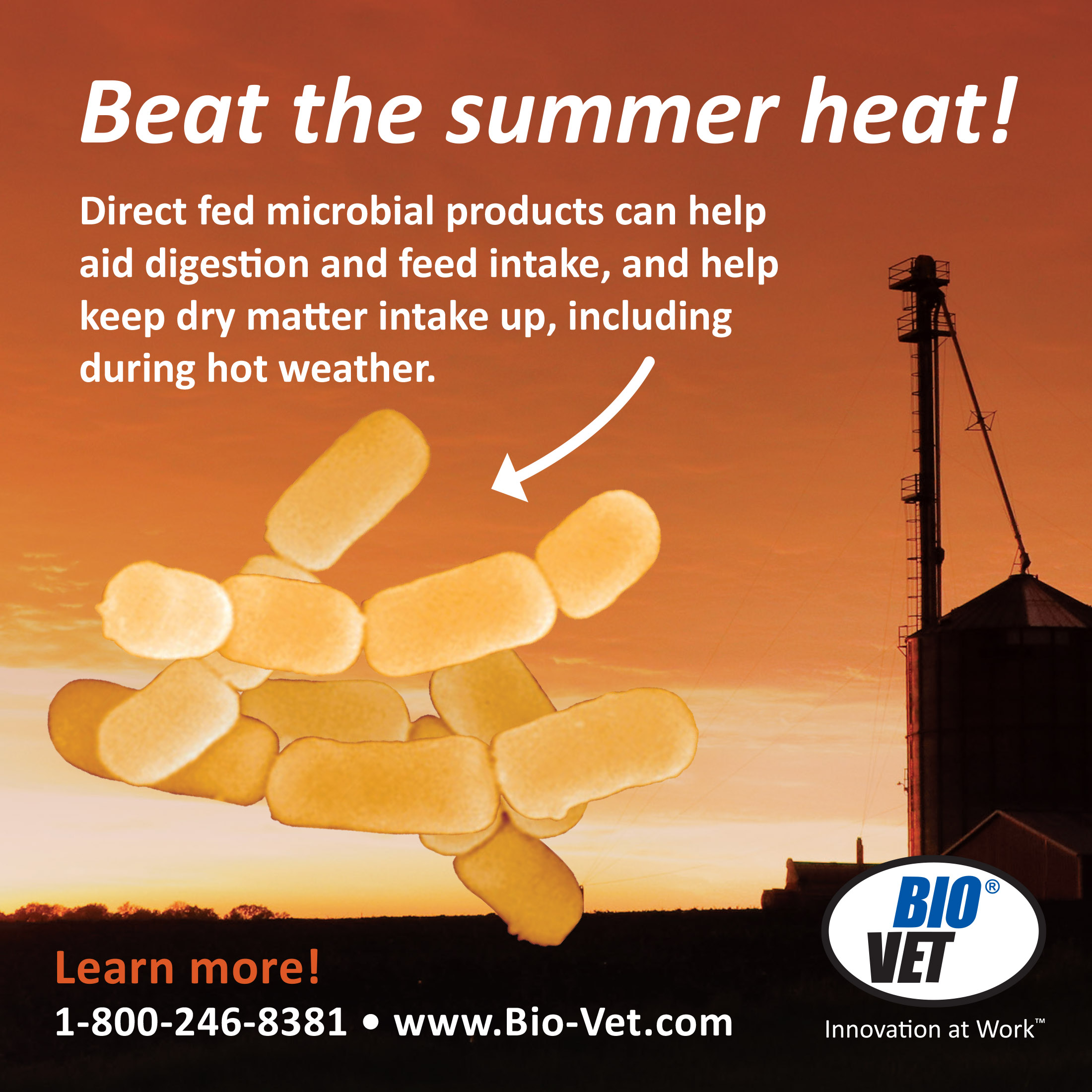 Beat the summer heat with DFMs